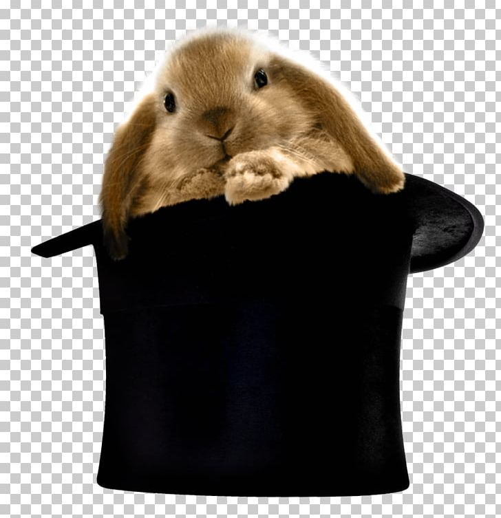 Bunny in top hat clipart free jpg clipart transparent download Top Hat Rabbit Hair Clothing PNG, Clipart, Beanie, Cap, Clipart ... clipart transparent download