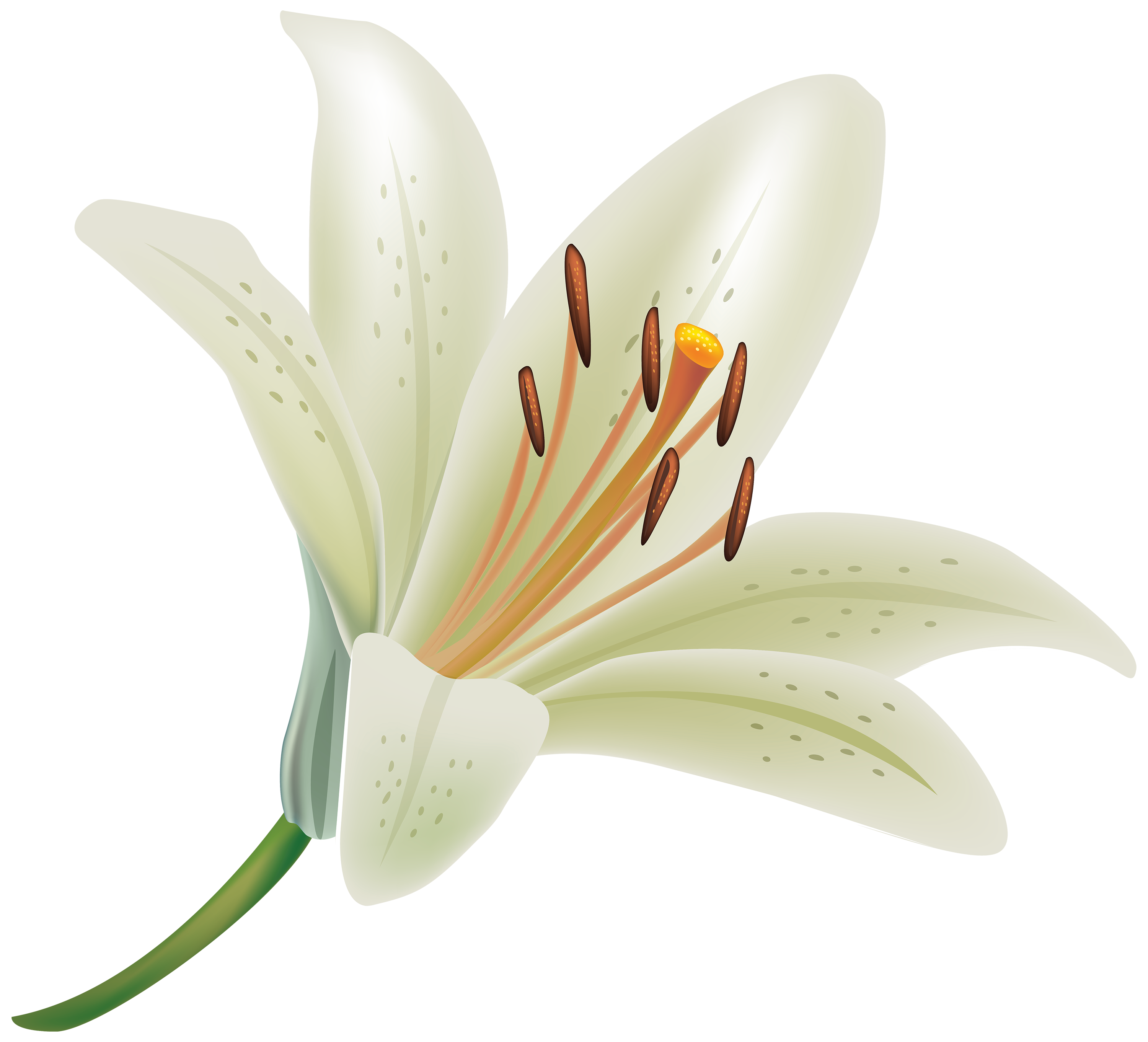 Lily flower clipart png transparent library Pin by Lily Webster on Tat ideas | Pinterest | White lily flower ... png transparent library