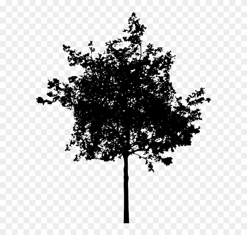 Bush silhouette clipart banner library Shrub Bushes Clipart Oak Tree - Small Tree Silhouette Png ... banner library