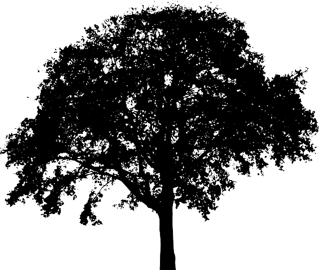Bush silhouette clipart vector transparent stock Free Image on Pixabay - Tree, Bush, Nature, Leaves, Trunk | Pixabay ... vector transparent stock