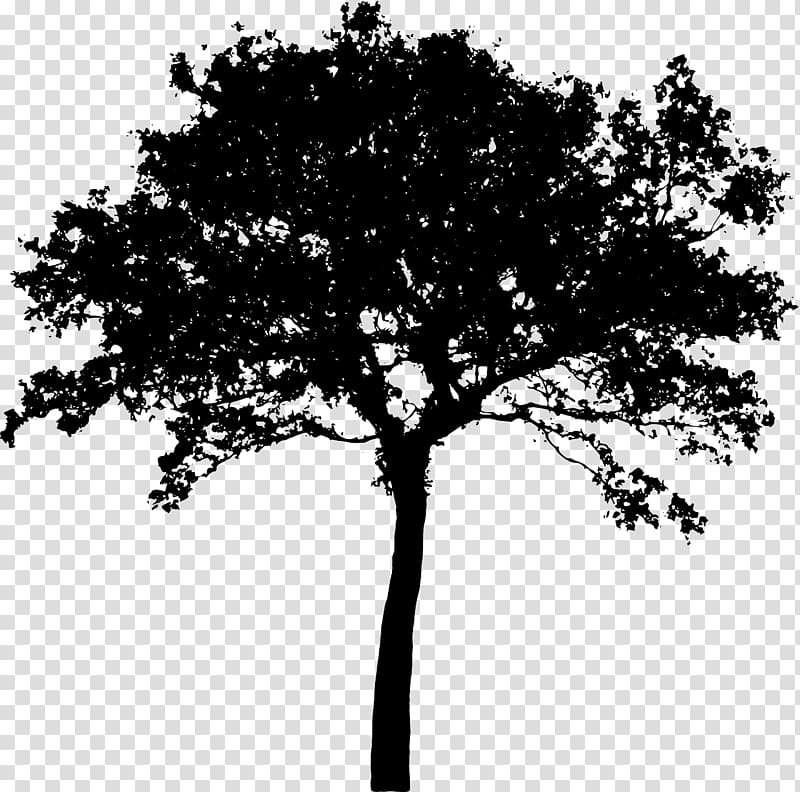 Bush silhouette clipart banner library Silhouette Tree , Bush transparent background PNG clipart | HiClipart banner library