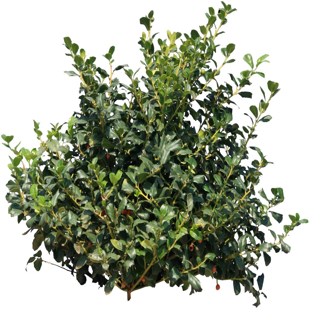Bush tree clipart clipart freeuse download Bushes tree png #42035 - Free Icons and PNG Backgrounds clipart freeuse download