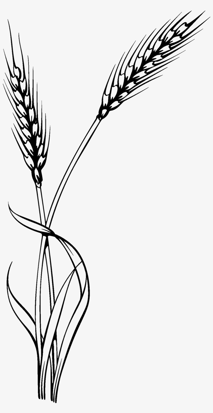 Bushel of wheat clipart clip royalty free download Oat Clipart Stalk - Wheat Vector Transparent PNG - 1220x2264 - Free ... clip royalty free download