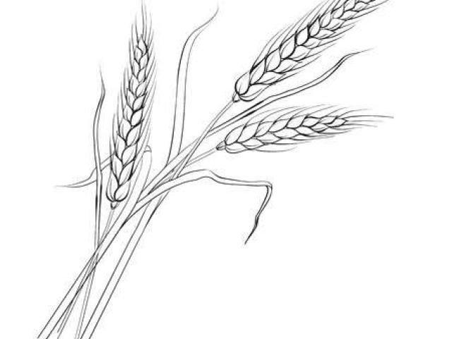 Bushel of wheat clipart svg free Free Wheat Clipart, Download Free Clip Art on Owips.com svg free