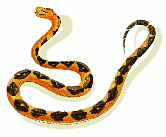 Bushmaster clipart image download Free bushmaster snake clipart 1 page of clip art – Gclipart.com image download
