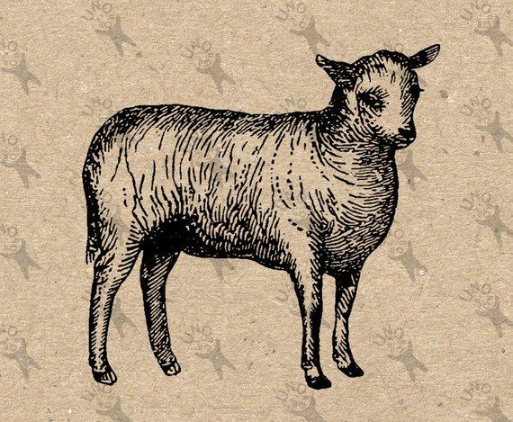 Butchered lamb clipart transparent stock Vintage Lamb Sheep Farm Instant Download Digital printable clipart ... transparent stock