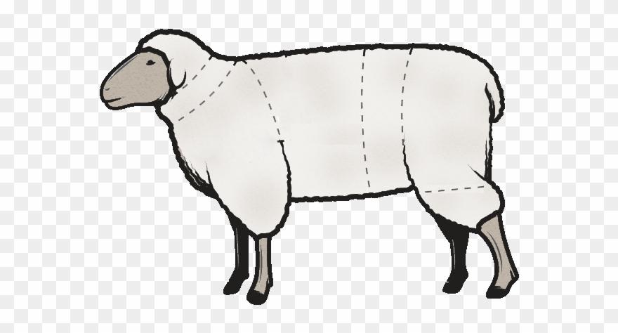 Butchered lamb clipart clipart transparent Butchering Cutting Instructions Clipart (#2909823) - PinClipart clipart transparent