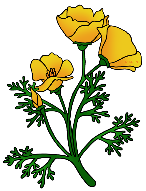 Buttercup flower clipart free download Buttercup Flower Clipart at GetDrawings.com   Free for personal use ... free download