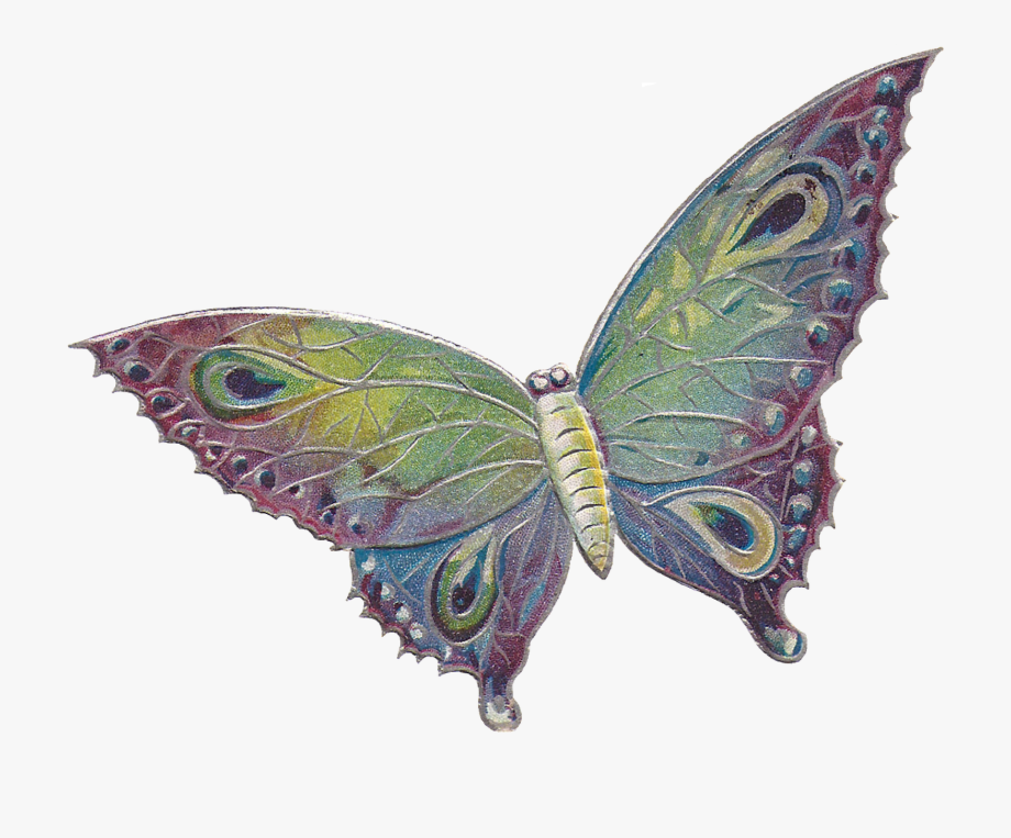 Butterflies day clipart png free library As Well As The And Files For Just The Butterfly - Happy Valentines ... png free library