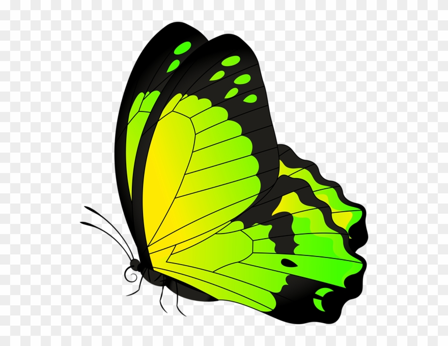 Butterflies in my stomach clipart clip art freeuse Butterfly Yellow Green Transparent Clip Art Image - Butterflies Clip ... clip art freeuse