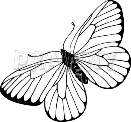 Young parents butterfly clipart picture free stock line art drawings of butterflies | Black & White Line Drawing of a ... picture free stock