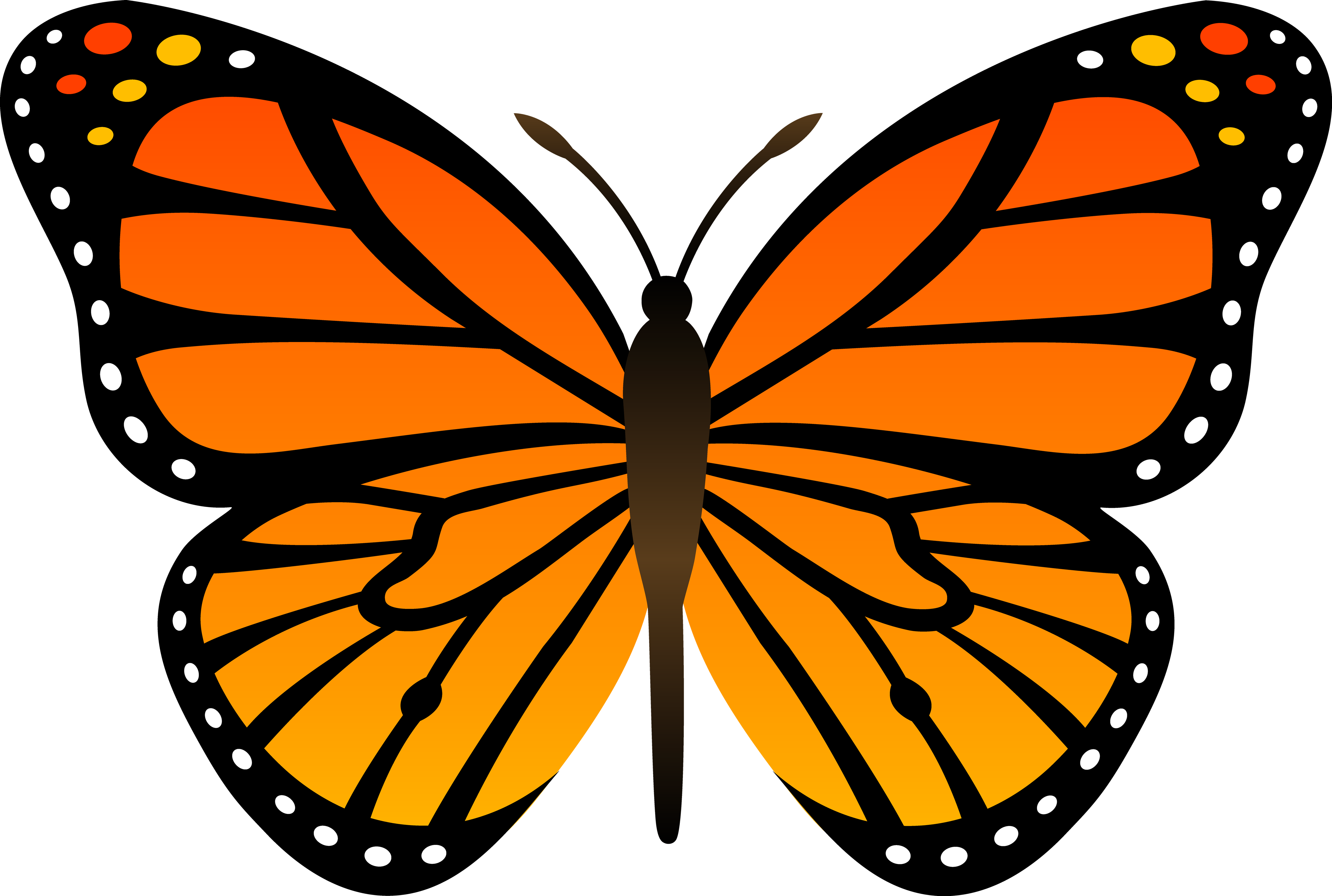 Butterfly clipart cross svg black and white Butterfly Fourteen | Isolated Stock Photo by noBACKS.com | clip art ... svg black and white