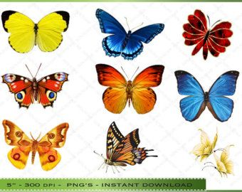 Butterfly clipart for commercial use clipart Digital Butterflies Clipart / Colorful Butterfly Clip Art / For ... clipart