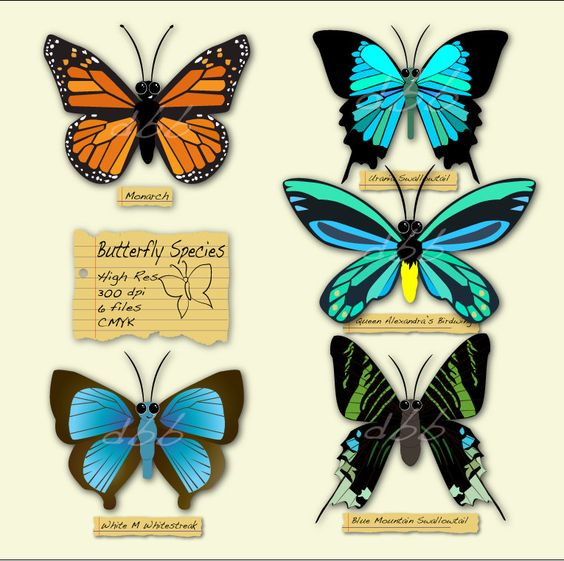 Butterfly clipart for commercial use vector transparent library Butterfly digital clip art, INSTANT digital DOWNLOAD, Commercial ... vector transparent library