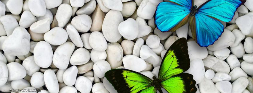 Butterfly clipart for facebook cover vector free library Butterfly clipart for facebook cover - ClipartFox vector free library