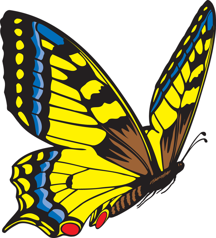 Flying butterfly clipart image