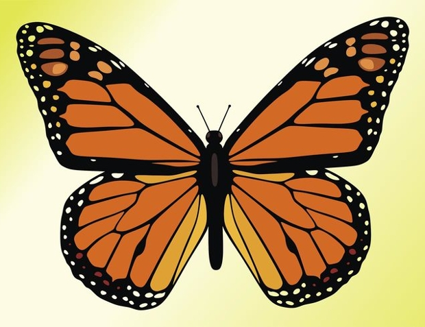 Butterfly clipart jpg free download 18+ Butterfly Cliparts - Vector EPS, JPG, PNG | Design Trends ... free download