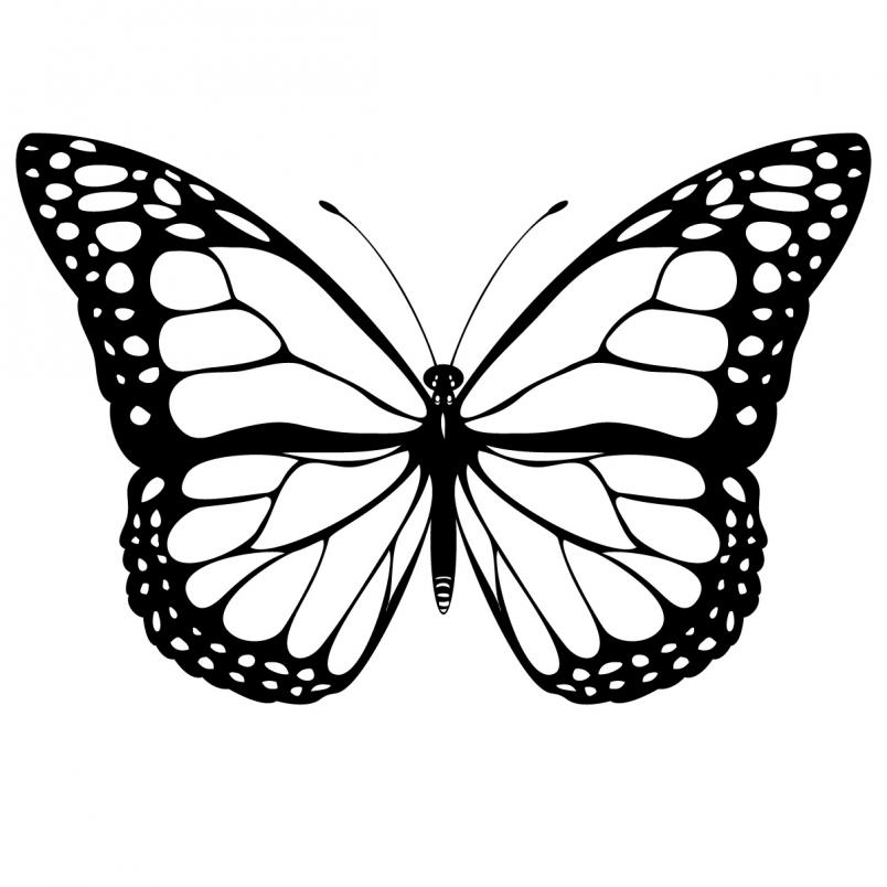 Butterfly clipart jpg vector Clipart butterfly clip art free borders image 7 - Clipartix vector