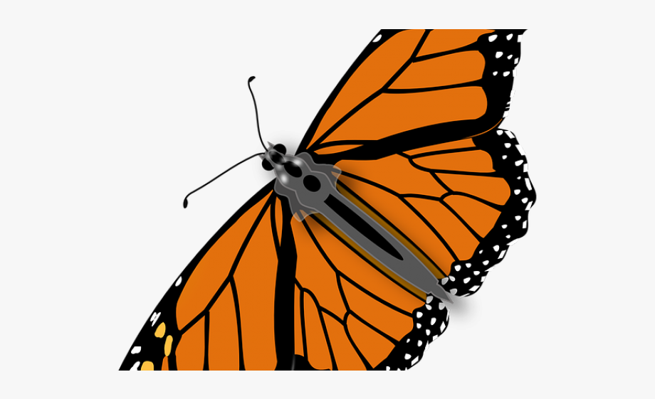 Butterfly cliparts graphic library library Monarch Butterfly Clipart Annimated - Butterfly With No Background ... graphic library library