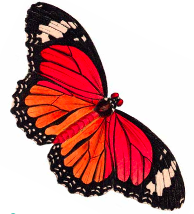 Butterfly images free clipart picture free stock Cute Butterfly Clipart | Clipart Panda - Free Clipart Images picture free stock