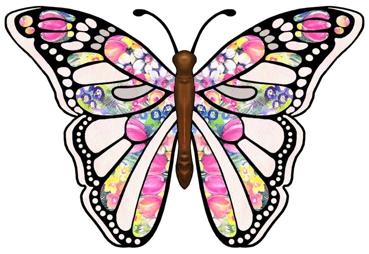 Butterfly images free clipart graphic free library Picture Of Butterfly For Free - ClipArt Best graphic free library