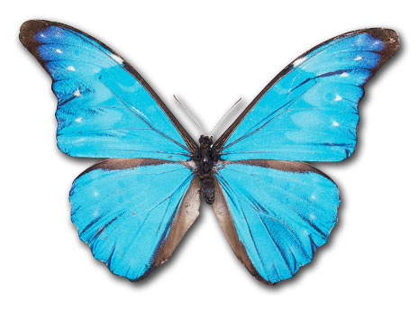 Butterfly images free clipart banner library Free Butterfly Clipart & Butterfly Clip Art Images - ClipartALL.com banner library