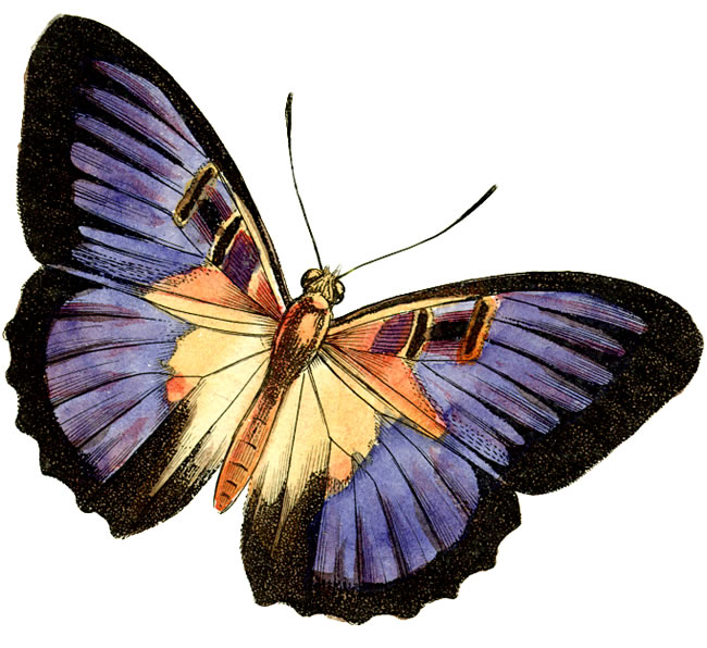 Butterfly images free clipart freeuse library Free Clipart Butterflies & Butterflies Clip Art Images ... freeuse library