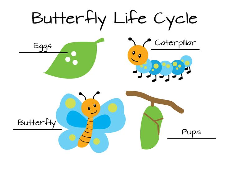 Butterfly life cycle clipart. Of a clipartfest clip