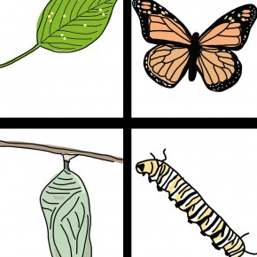 Butterfly life cycle clipart graphic transparent stock Life Cycle of the Butterfly: Hand-Drawn Clipart | ezk12lessons.com graphic transparent stock