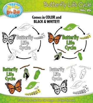 Butterfly life cycle clipart freeuse Butterfly Life Cycle Clipart Set — Comes In Color and Bl | TPT ... freeuse