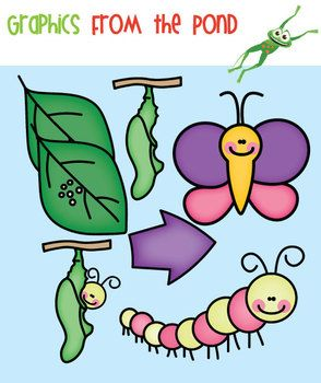 Butterfly life cycle clipart.  best images about