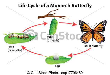 Butterfly life cycle clipart banner free library Clipart life cycle of butterfly - ClipartFox banner free library