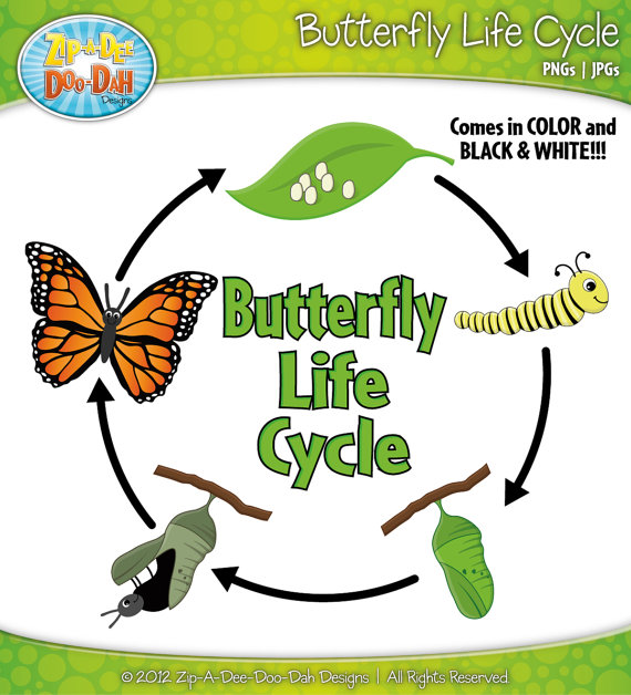Butterfly life cycle clipart picture free Life cycle of a butterfly clipart - ClipartFest picture free