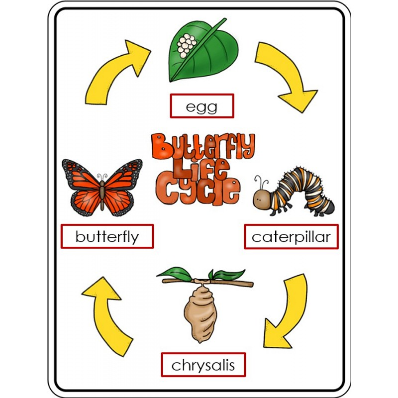 Butterfly life cycle clipart graphic freeuse Life cycle of a butterfly clipart - ClipartFest graphic freeuse