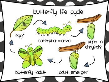 Butterfly life cycle clipart banner library stock Life cycle of a butterfly clipart - ClipartFest banner library stock