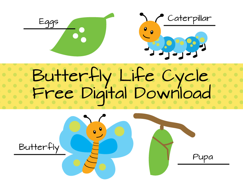 Butterfly life cycle clipart picture freeuse download 17 Best images about butterfly life cycle for preschoolers on ... picture freeuse download