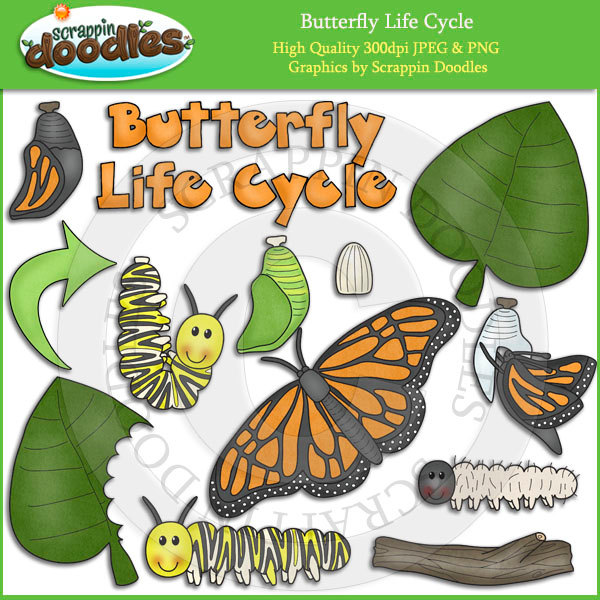Butterfly life cycle clipart vector royalty free download Butterfly Life Cycle Clip Art vector royalty free download