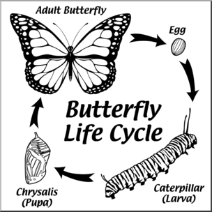Butterfly life cycle clipart black and white jpg transparent stock Clip Art: Butterfly Life Cycle B&W I abcteach.com   abcteach jpg transparent stock
