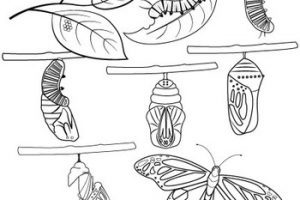 Butterfly life cycle clipart black and white clipart freeuse library Butterfly life cycle clipart black and white » Clipart Portal clipart freeuse library