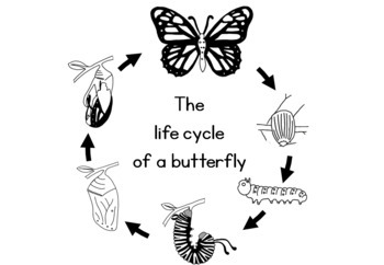 Butterfly life cycle clipart black and white picture royalty free download Butterfly life cycle worksheet picture royalty free download