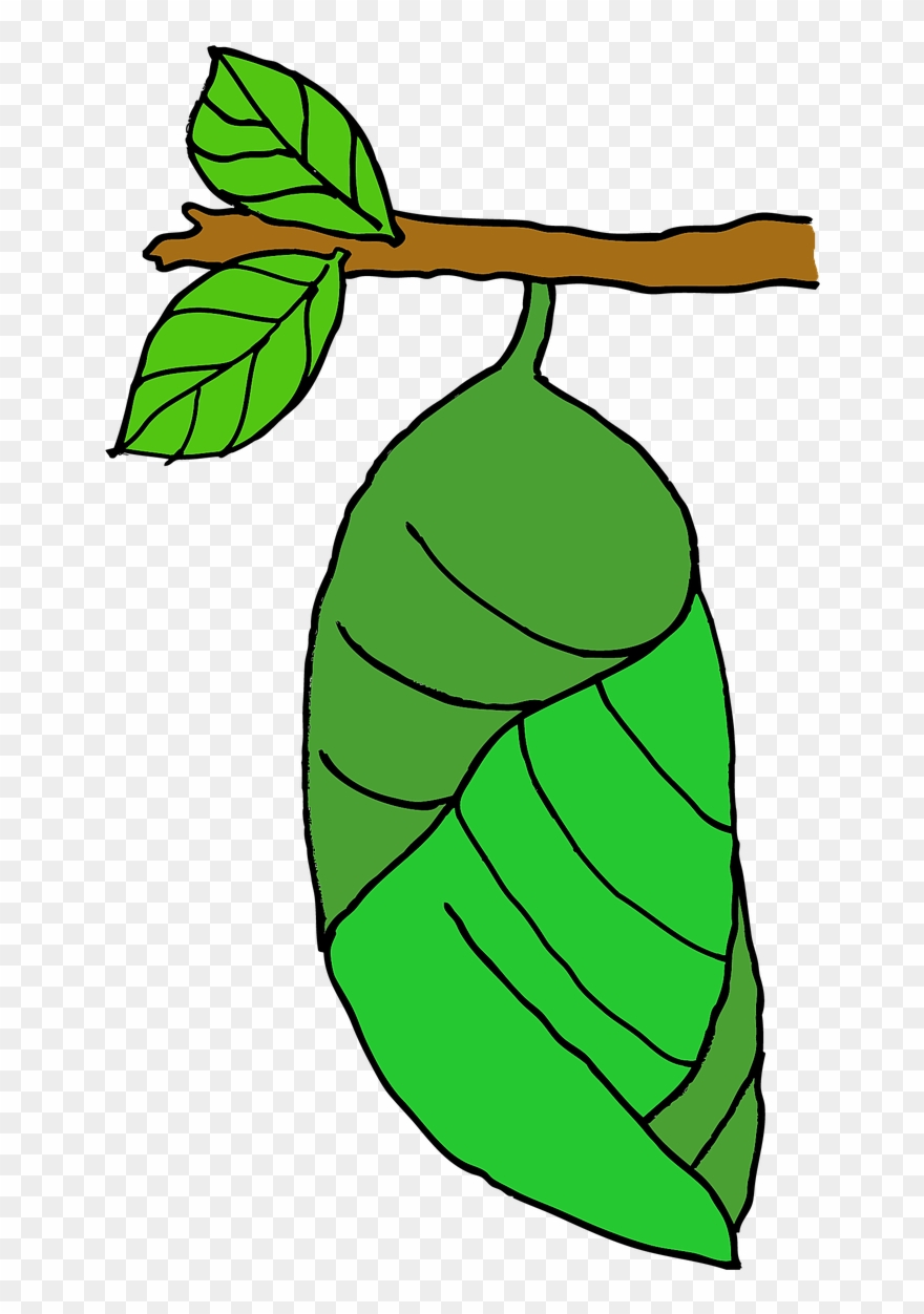 Butterfly pupa clipart clip art library Butterfly Cocoon Clipart - Png Download (#2301156) - PinClipart clip art library