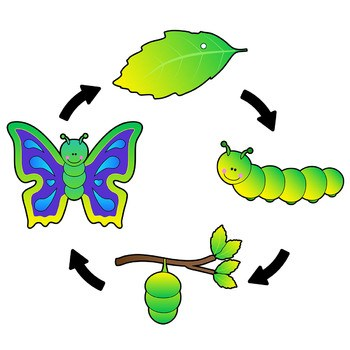Butterfly pupa clipart vector library library Butterfly caterpillar clipart 3 » Clipart Portal vector library library