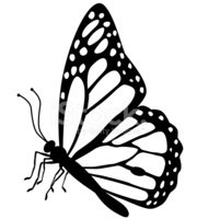 Butterfly side view clipart image download Monarch Butterfly Side View IN Black and White stock vectors ... image download