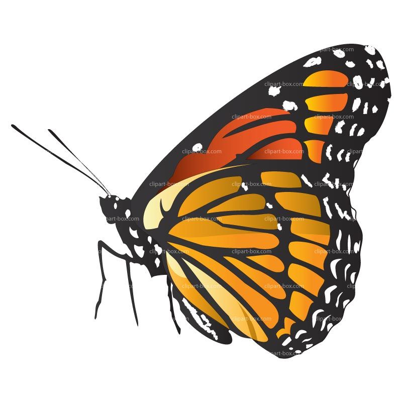Butterfly side view clipart royalty free stock Flower Side View Clipart | art | Butterfly clip art, Vector design ... royalty free stock