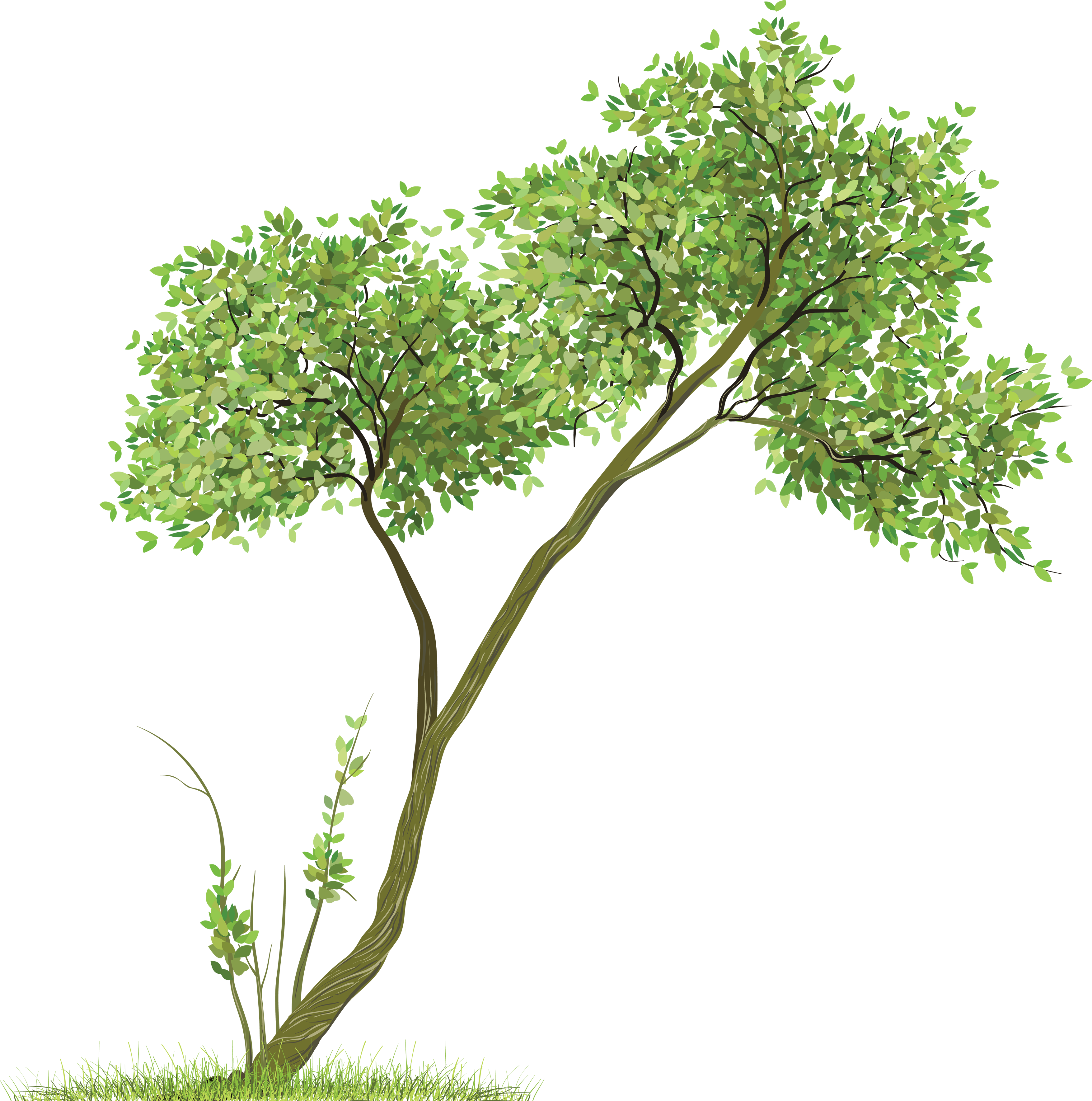Butternut tree clipart png royalty free library Pin by Charudeal on Render | Picsart png, Tree images, Clip art png royalty free library