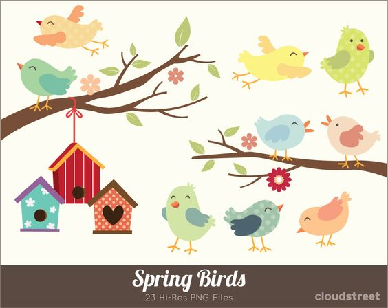Spring birds personal and. Buying clipart for commercial use