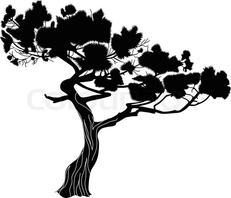 B&w clipart bayou cypress tree black and white stock Cypress Tree Silhouette | Cypress Tree Silhouette Vector Of Fur A ... black and white stock