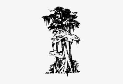 B&w clipart bayou cypress tree clip art freeuse library Cypress PNG - DLPNG.com clip art freeuse library
