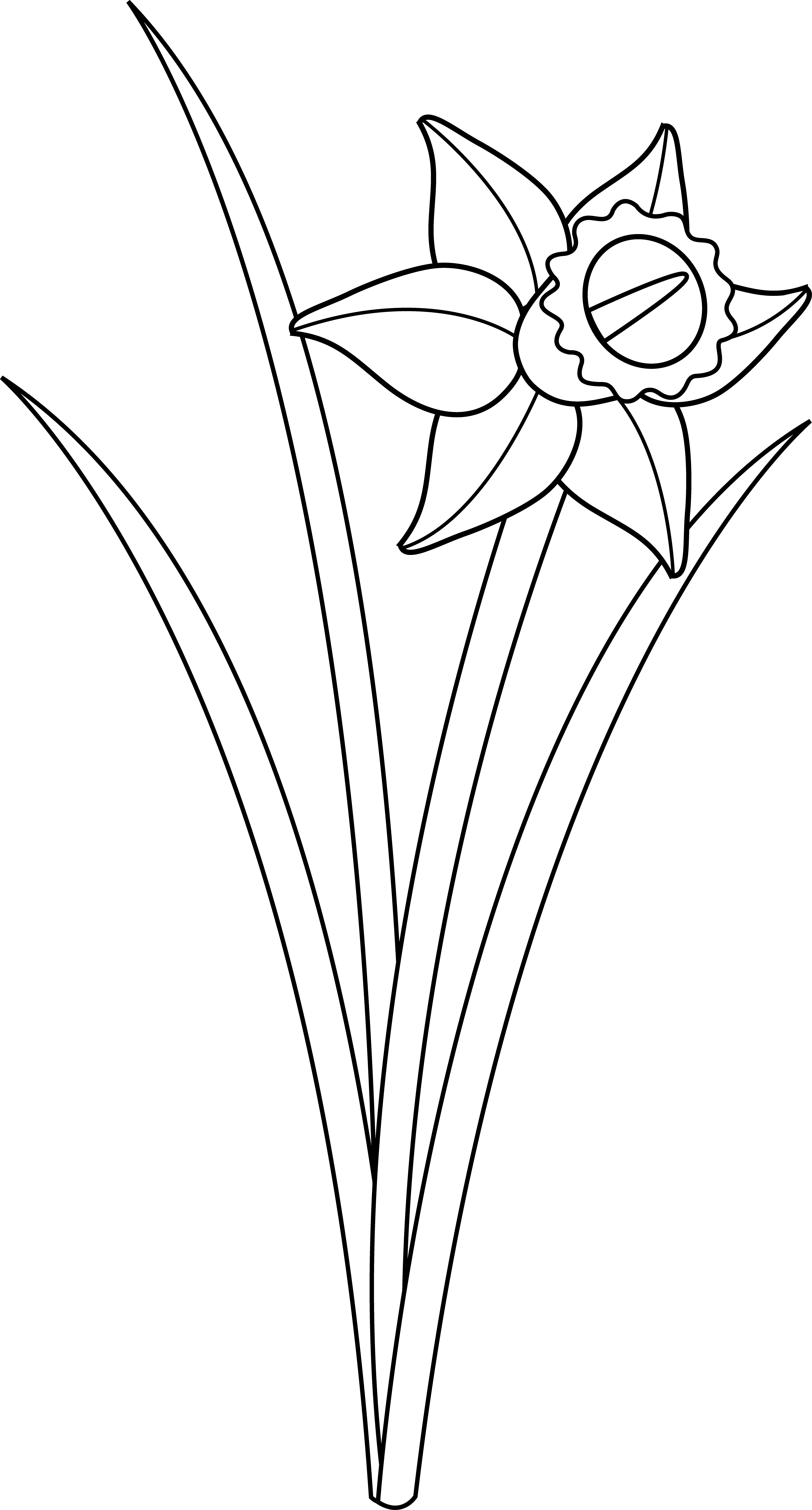 Free flower outline clipart svg freeuse eletragesi: Daffodil Clipart Black And White Images svg freeuse