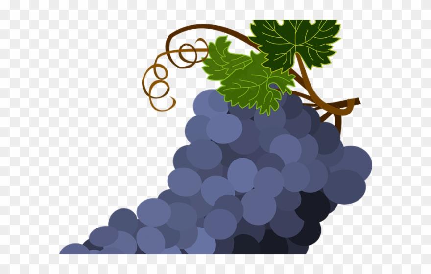 Cachos clipart image transparent download Grapes Clipart Transparent Background - Cacho De Uvas Vetor - Png ... image transparent download